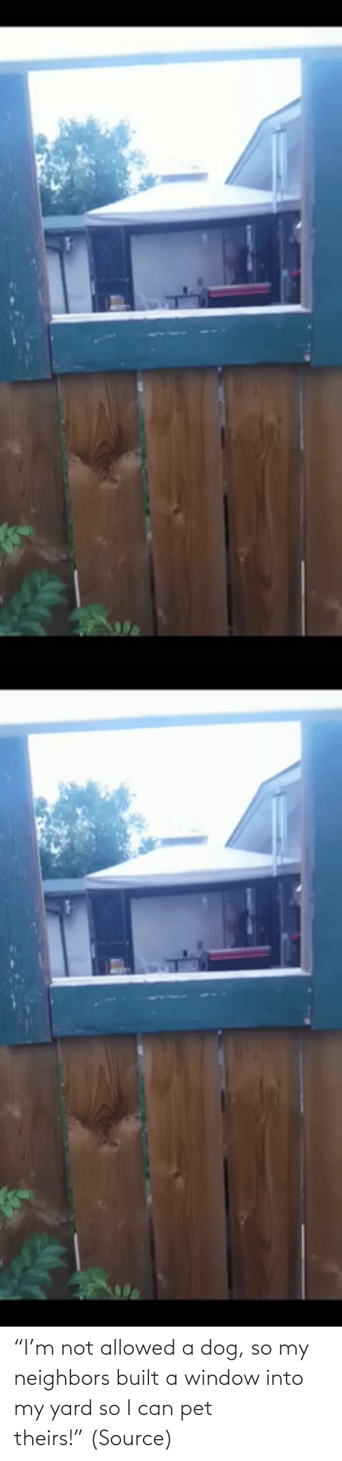 "aww: ""I'm not allowed a dog, so my neighbors built a window into my yard so I can pet theirs!"" (Source)"