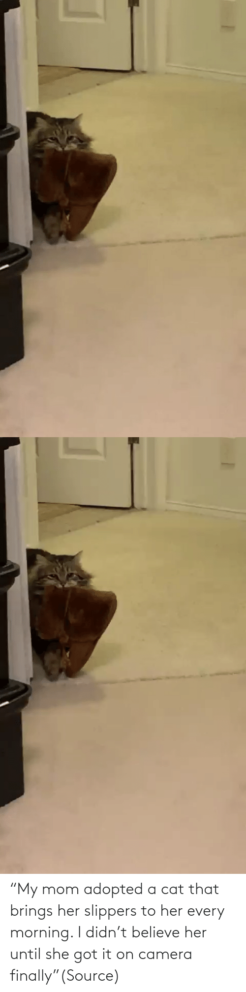 """believe: """"My mom adopted a cat that brings her slippers to her every morning. I didn't believe her until she got it on camera finally""""(Source)"""