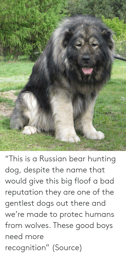 "made: ""This is a Russian bear hunting dog, despite the name that would give this big floof a bad reputation they are one of the gentlest dogs out there and we're made to protec humans from wolves. These good boys need more recognition"" (Source)"