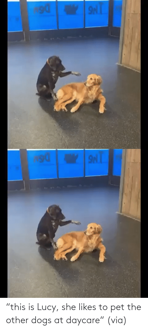 """Other: """"this is Lucy, she likes to pet the other dogs at daycare""""(via)"""