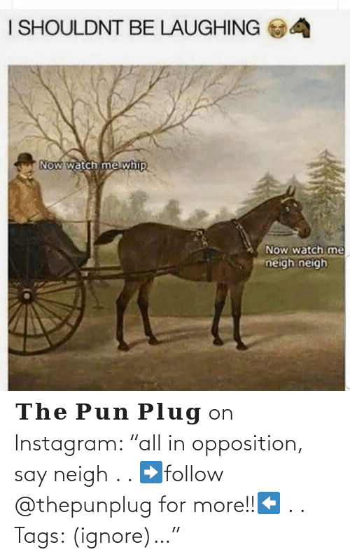 """The: 𝐓𝐡𝐞 𝐏𝐮𝐧 𝐏𝐥𝐮𝐠 on Instagram: """"all in opposition, say neigh . . ➡️follow @thepunplug for more!!⬅️ . . Tags: (ignore)…"""""""