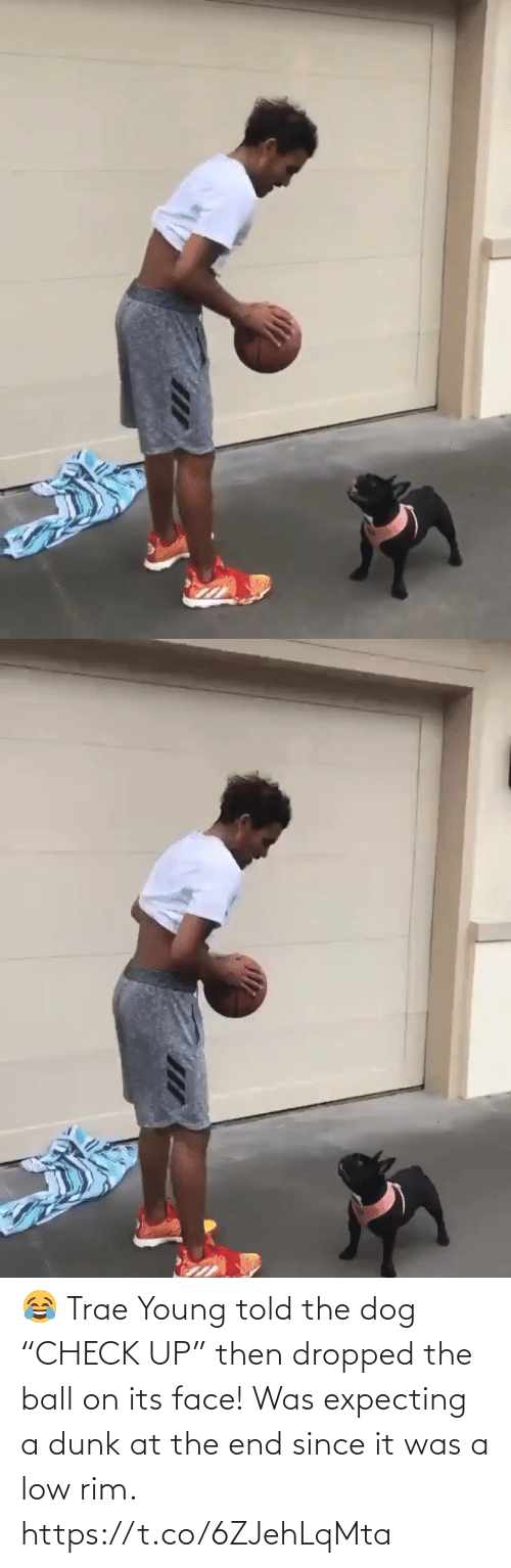 """the end: 😂 Trae Young told the dog """"CHECK UP"""" then dropped the ball on its face!  Was expecting a dunk at the end since it was a low rim. https://t.co/6ZJehLqMta"""