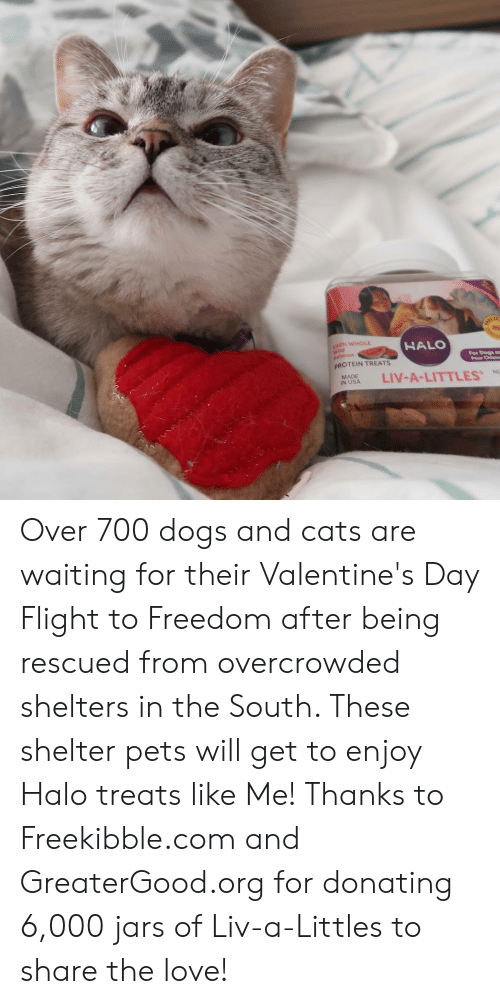Cats, Dogs, and Halo: 00% WHOLE  HALO  id  For Dogs a  Pour Chienm  PROTEIN TREATS  NASA LIV-A-LITTLES  MADE  %NE Over 700 dogs and cats are waiting for their Valentine's Day Flight to Freedom after being rescued from overcrowded shelters in the South. These shelter pets will get to enjoy Halo treats like Me! Thanks to Freekibble.com and GreaterGood.org for donating 6,000 jars of Liv-a-Littles to share the love!