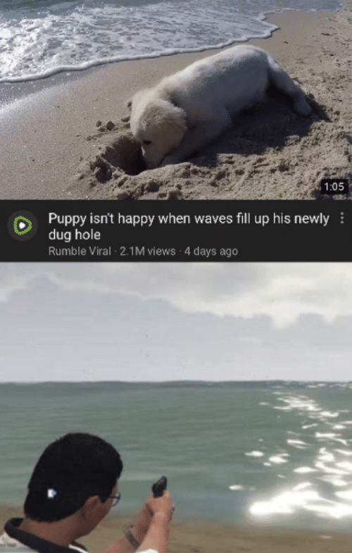 fill up: 1:05  Puppy isn't happy when waves fill up his newly  dug hole  Rumble Viral 2.1M views 4 days ago