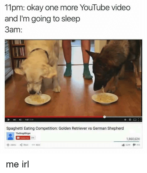 youtube.com, German Shepherd, and Golden Retriever: 11pm: okay one more YouTube video  and I'm going to sleep  3am:  1:57/241  Spaghetti Eating Competition: Golden Retriever vs German Shepherd  TheBragdBirger  206  1,860,624  3249 113  Add to me irl