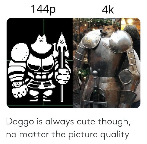 Cute, Doggo, and Picture: 144p  4k  2. Doggo is always cute though, no matter the picture quality