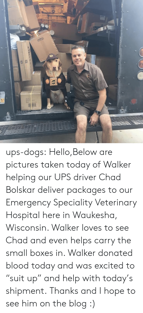 """packages: 17  DEC ups-dogs: Hello,Below are pictures taken today of Walker helping our UPS driver Chad Bolskar deliver packages to our Emergency  Speciality Veterinary Hospital here in Waukesha, Wisconsin. Walker loves to see Chad and even helps carry the small boxes in. Walker donated blood today and was excited to """"suit up"""" and help with today's shipment. Thanks and I hope to see him on the blog :)"""