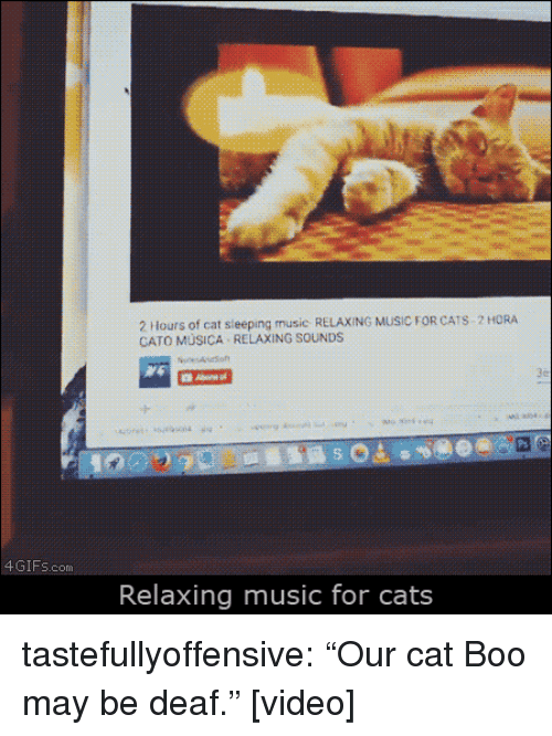 """Cato: 2 Hours of cat sieeping music RELAXING MUSIC FOR CATS 2 HORA  CATO MÜSICA RELAXING SOUNDS  4GIFs.com  Relaxing music for cats tastefullyoffensive:  """"Our cat Boo may be deaf."""" [video]"""