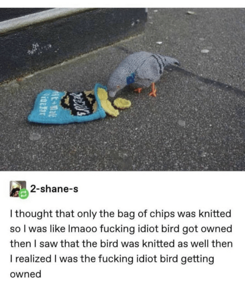 Fucking, Saw, and Idiot: 2-shane-s  I thought that only the bag of chips was knitted  so I was like Imaoo fucking idiot bird got owned  then I saw that the bird was knitted as well then  I realized I was the fucking idiot bird getting  owned  pecal's