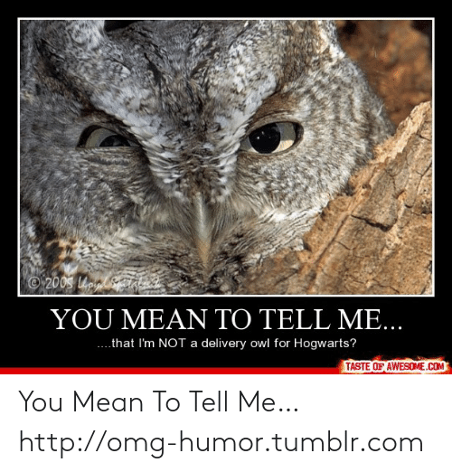 Taha: 200S o taha  YOU MEAN TO TELL ME...  ....that I'm NOT a delivery owl for Hogwarts?  TASTE OF AWESOME.COM You Mean To Tell Me…http://omg-humor.tumblr.com