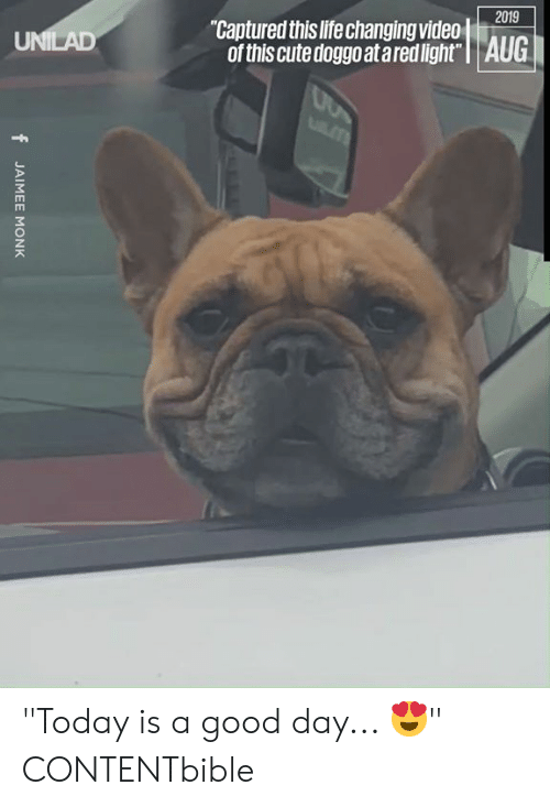 """Cute, Dank, and Life: 2019  """"Captured this life changing video  of this cute doggo at ared light"""" 
