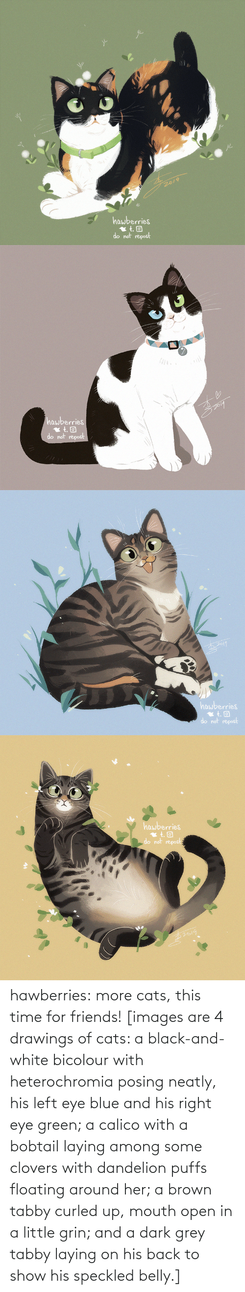 Images: 2019  hawberries  do not repost   hawberries  do not repost   hawberries  do not repost   hawberries  do not repost hawberries: more cats, this time for friends! [images are 4 drawings of cats: a black-and-white bicolour with heterochromia posing neatly, his left eye blue and his right eye green; a calico with a bobtail laying among some clovers with dandelion puffs floating around her; a brown tabby curled up, mouth open in a little grin; and a dark grey tabby laying on his back to show his speckled belly.]