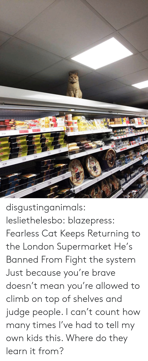 Learn It: 250  so disgustinganimals:  lesliethelesbo:  blazepress:  Fearless Cat Keeps Returning to the London Supermarket He's Banned From  Fight the system  Just because you're brave doesn't mean you're allowed to climb on top of shelves and judge people. I can't count how many times I've had to tell my own kids this. Where do they learn it from?