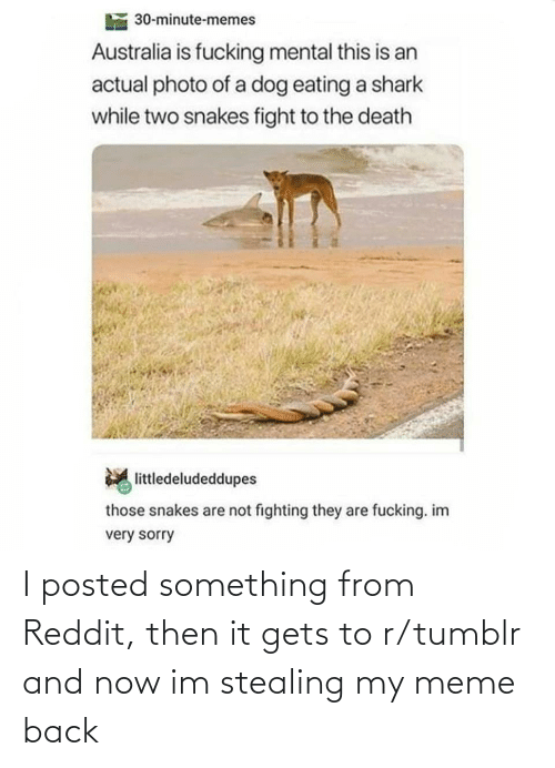 Are Not: 30-minute-memes  Australia is fucking mental this is an  actual photo of a dog eating a shark  while two snakes fight to the death  littledeludeddupes  those snakes are not fighting they are fucking. im  very sorry I posted something from Reddit, then it gets to r/tumblr and now im stealing my meme back