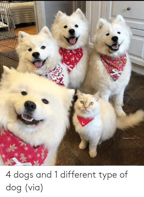 type: 4 dogs and 1 different type of dog (via)