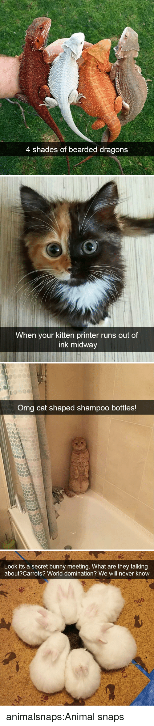 Bearded: 4 shades of bearded dragons   When your kitten printer runs out of  ink midway   Omg cat shaped shampoo bottles!   Look its a secret bunny meeting. What are they talking  about?Carrots? World domination? We will never know animalsnaps:Animal snaps