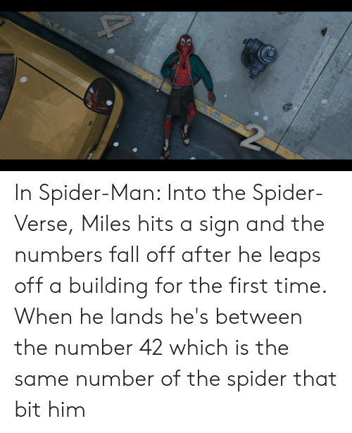 Fall, Spider, and SpiderMan: 40  2 In Spider-Man: Into the Spider-Verse, Miles hits a sign and the numbers fall off after he leaps off a building for the first time. When he lands he's between the number 42 which is the same number of the spider that bit him
