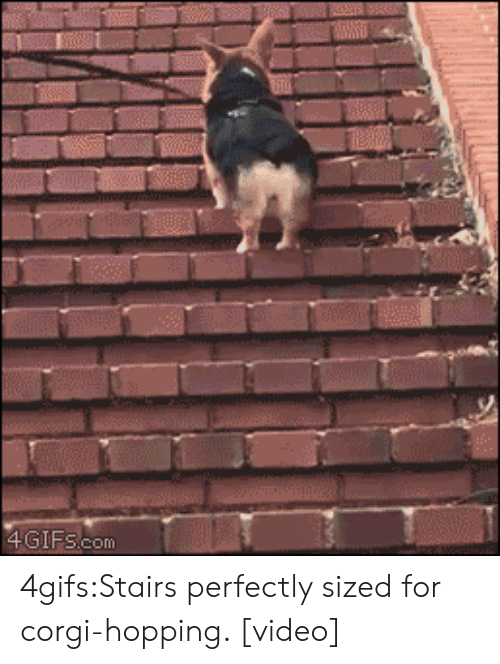hops: 4GIFS.com 4gifs:Stairs perfectly sized for corgi-hopping. [video]