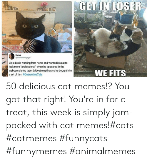 treat: 50 delicious cat memes!? You got that right! You're in for a treat, this week is simply jam-packed with cat memes!#cats #catmemes #funnycats #funnymemes #animalmemes