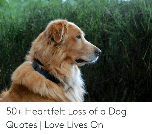 🐣 25+ Best Memes About Loss of a Dog | Loss of a Dog Memes