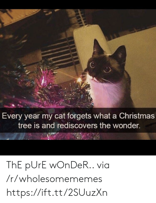 Christmas, Christmas Tree, and Tree: 6  Every year my cat forgets what a Christmas  tree is and rediscovers the wonder. ThE pUrE wOnDeR.. via /r/wholesomememes https://ift.tt/2SUuzXn