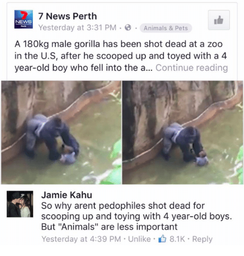 "Pedophillic: 7 News Perth  Yesterday at 3:31 PM B  Animals & Pets  A 180kg male gorilla has been shot dead at a zoo  in the U.S, after he scooped up and toyed with a 4  year-old boy who fell into the a  Continue reading  Jamie Kahu  So why arent pedophiles shot dead for  scooping up and toying with 4 year-old boys  But ""Animals"" are less important  Yesterday at 4:39 PM Unlike  8.1K Reply"