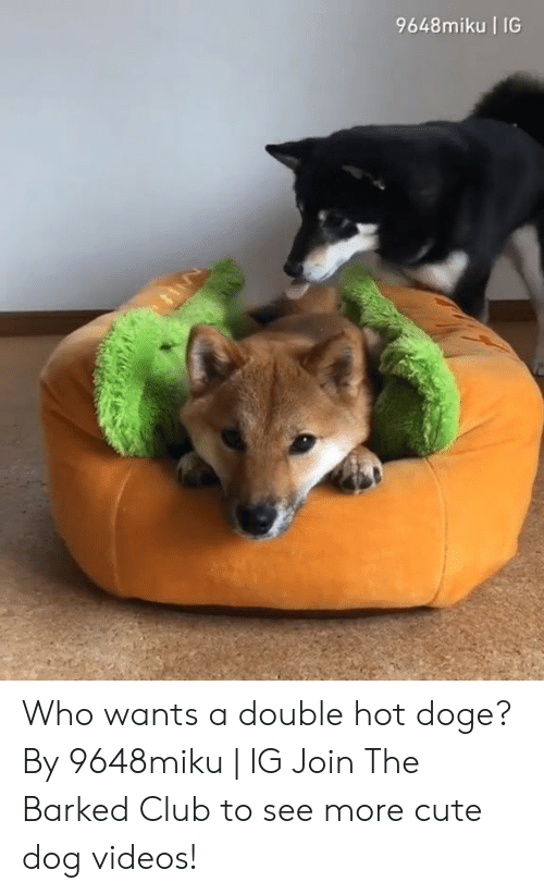 Doge: 9648miku IG  La Who wants a double hot doge? By 9648miku | IG  Join The Barked Club to see more cute dog videos!