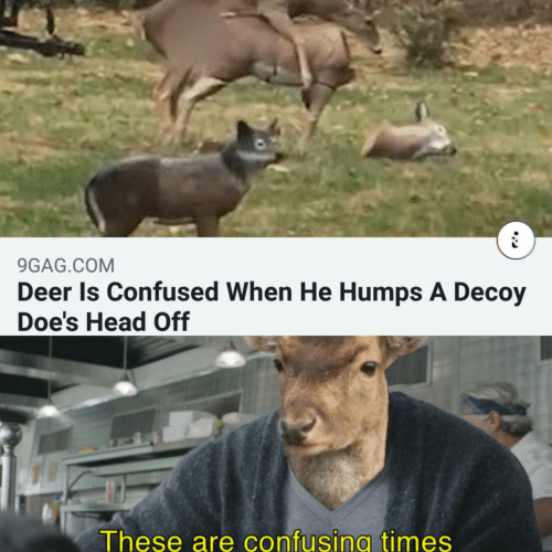9gag: 9GAG.COM  Deer Is Confused When He Humps A Decoy  Doe's Head Off  These are confusing times