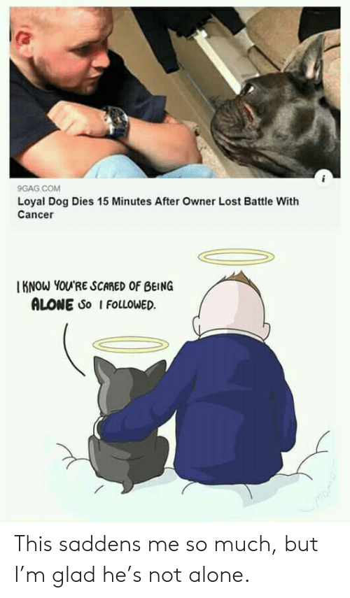 Not Alone: 9GAG COM  Loyal Dog Dies 15 Minutes After Owner Lost Battle With  Cancer  KNOW YOU'RE SCARED OF BEING  ALONE So I FOLLOWED This saddens me so much, but I'm glad he's not alone.