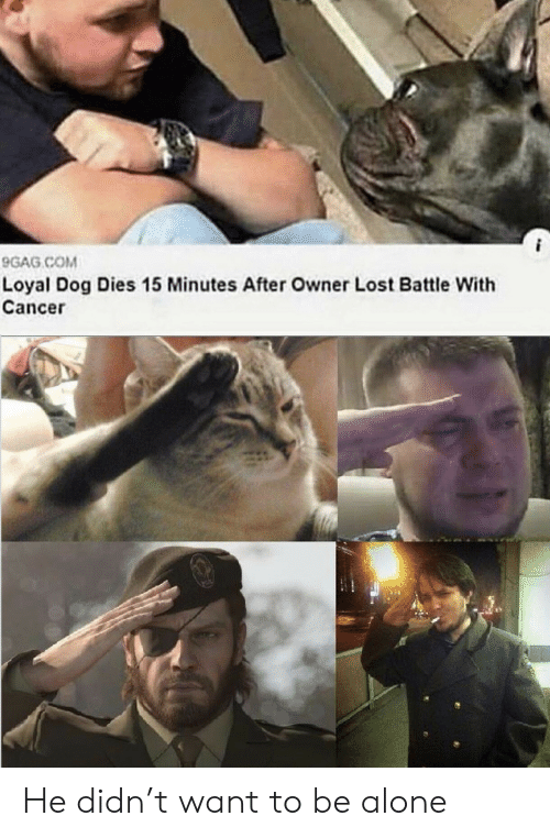 9gag: 9GAG COM  Loyal Dog Dies 15 Minutes After Owner Lost Battle With  Cancer He didn't want to be alone