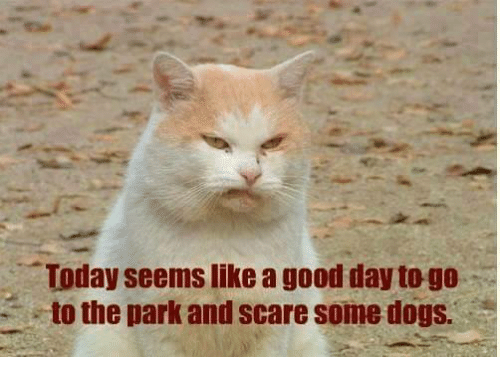 a-good-day