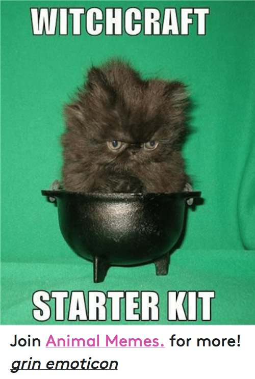 Animation Meme: WITCHCRAFT  STARTER KIT Join Animal Memes. for more! grin emoticon