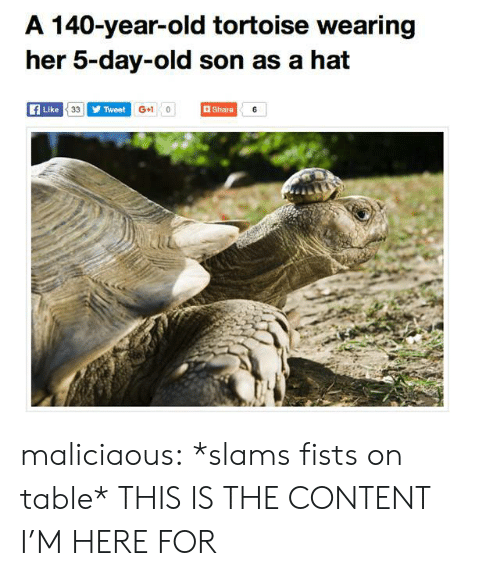 Target, Tumblr, and Blog: A 140-year-old tortoise wearing  her 5-day-old son as a hat  Like  Tweet  G+1 0  Share  iu maliciaous:  *slams fists on table* THIS IS THE CONTENT I'M HERE FOR
