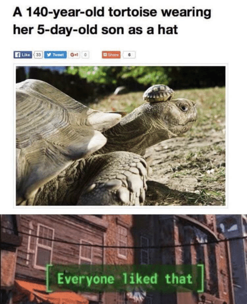 Wearing: A 140-year-old tortoise wearing  her 5-day-old son as a hat  Like 33 Tweet G+10  Share 6  Everyone liked that