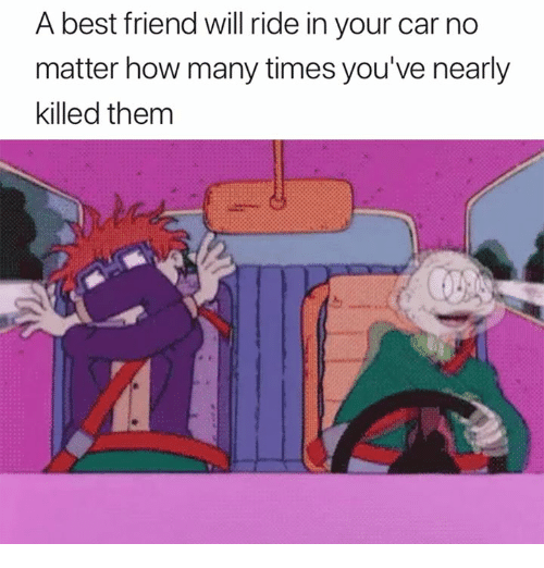 A Best Friend: A best friend will ride in your car no  matter how many times you've nearly  killed them
