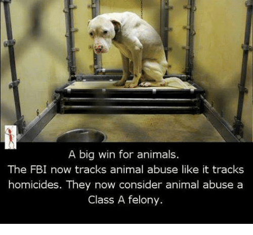 Fbi, Memes, and Animal Abuse: A big win for animals.  The FBI now tracks animal abuse like it tracks  homicides. They now consider animal abuse a  Class A felony.