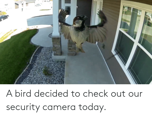 security: A bird decided to check out our security camera today.