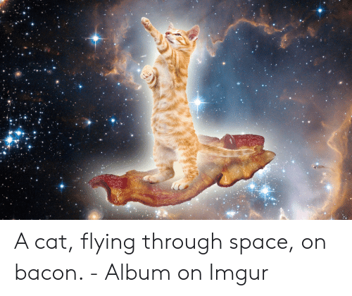 🐣 25+ Best Memes About Cat Flying | Cat Flying Memes