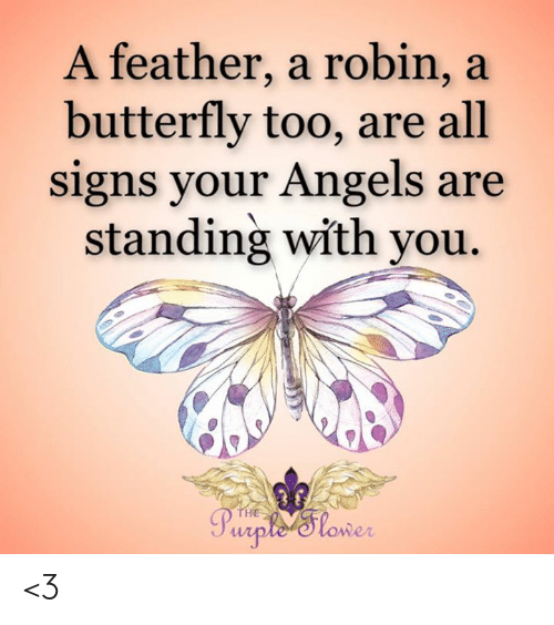Love for Quotes: A feather, a robin, a  butterfly too, are all  signs your Angels are  standing with you.  THE  Purple'Tlower <3