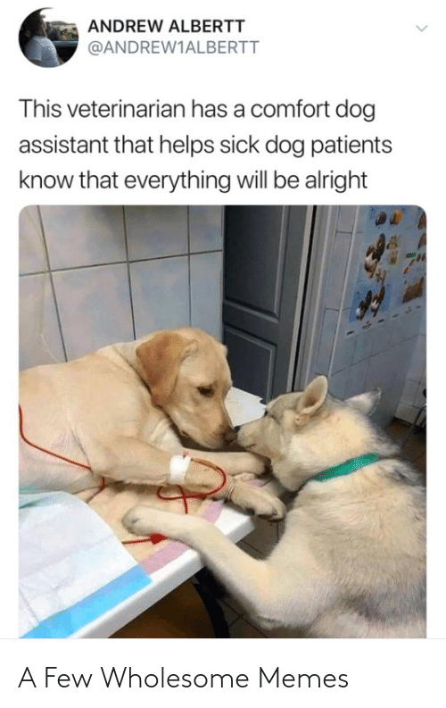 Wholesome: A Few Wholesome Memes