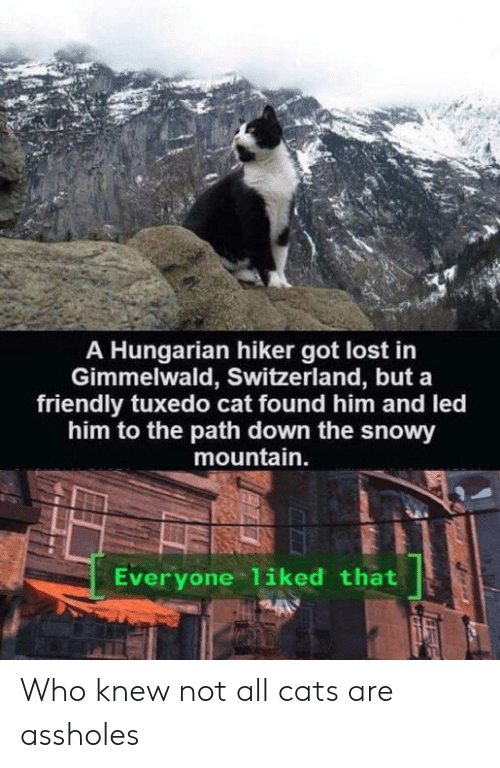 Cats, Lost, and Switzerland: A Hungarian hiker got lost in  Gimmelwald, Switzerland, but a  friendly tuxedo cat found him and led  him to the path down the snowy  mountain.  Everyone 1iked that Who knew not all cats are assholes