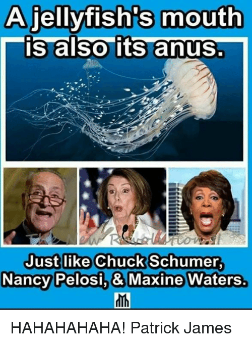 chuck schumer: A jellyfish's mouth  is also its anus.  Justlike Chuck Schumer  NancyPelosi,& Maxine Waters. HAHAHAHAHA!  Patrick James