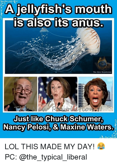 chuck schumer: A jellyfish's mouth  is also its anus  The Mew Revolution  Just like Chuck Schumer  Nancy  Pelosi.& Maxine Waters. LOL THIS MADE MY DAY! 😂 PC: @the_typical_liberal