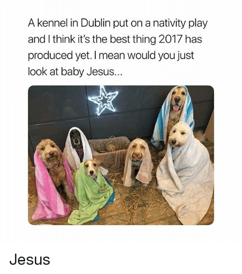 nativity: A kennel in Dublin put on a nativity play  and l think it's the best thing 2017 has  produced yet. I mean would you just  look at baby Jesus... Jesus