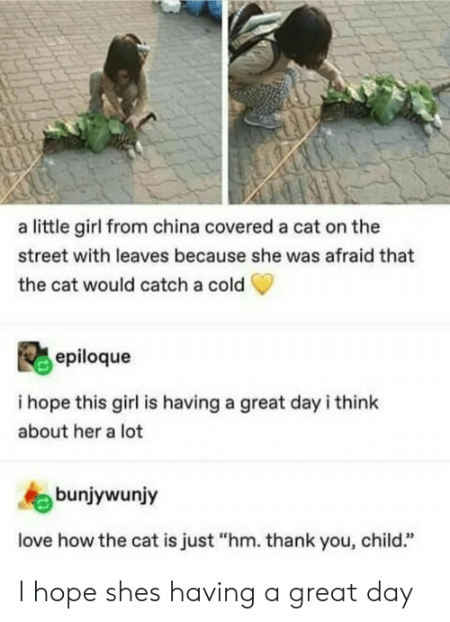 "Love, China, and Thank You: a little girl from china covered a cat on the  street with leaves because she was afraid that  the cat would catch a cold  epiloque  i hope this girl is having a great dayi think  about her a lot  bunjywunjy  love how the cat is just ""hm. thank you, child."" I hope shes having a great day"