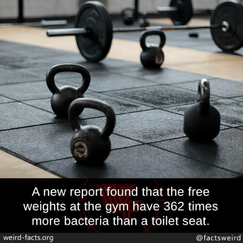 Facts, Gym, and Memes: A new report found that the free  weights at the gym have 362 times  more bacteria than a toilet seat.  weird-facts.org  @factsweird