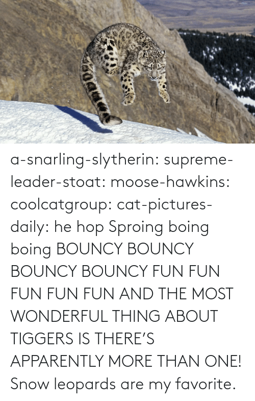 my favorite: a-snarling-slytherin: supreme-leader-stoat:  moose-hawkins:  coolcatgroup:  cat-pictures-daily: he hop  Sproing boing boing    BOUNCY BOUNCY BOUNCY BOUNCY FUN FUN FUN FUN FUN  AND THE MOST WONDERFUL THING ABOUT TIGGERS IS THERE'S APPARENTLY MORE THAN ONE!   Snow leopards are my favorite.
