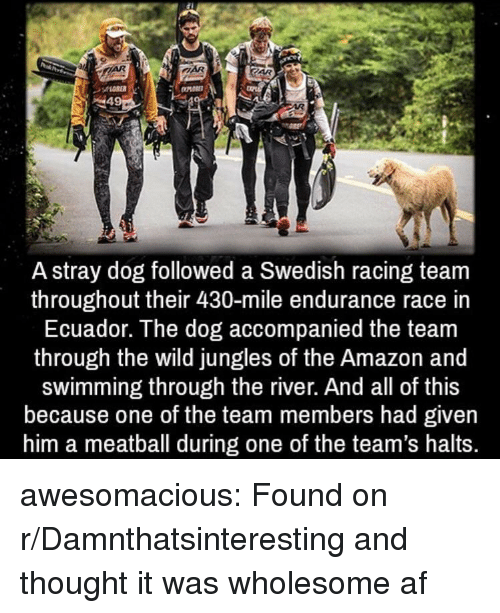 Af, Amazon, and Tumblr: A stray dog followed a Swedish racing team  throughout their 430-mile endurance race in  Ecuador. The dog accompanied the team  through the wild jungles of the Amazon and  swimming through the river. And all of this  because one of the team members had given  him a meatball during one of the team's halts. awesomacious:  Found on r/Damnthatsinteresting and thought it was wholesome af
