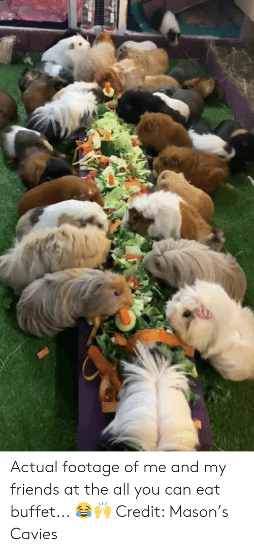 Friends, The All, and Can: Actual footage of me and my friends at the all you can eat buffet... 😂🙌  Credit: Mason's Cavies