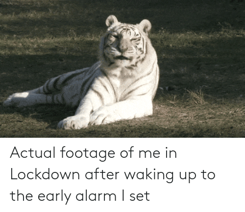 Of Me: Actual footage of me in Lockdown after waking up to the early alarm I set